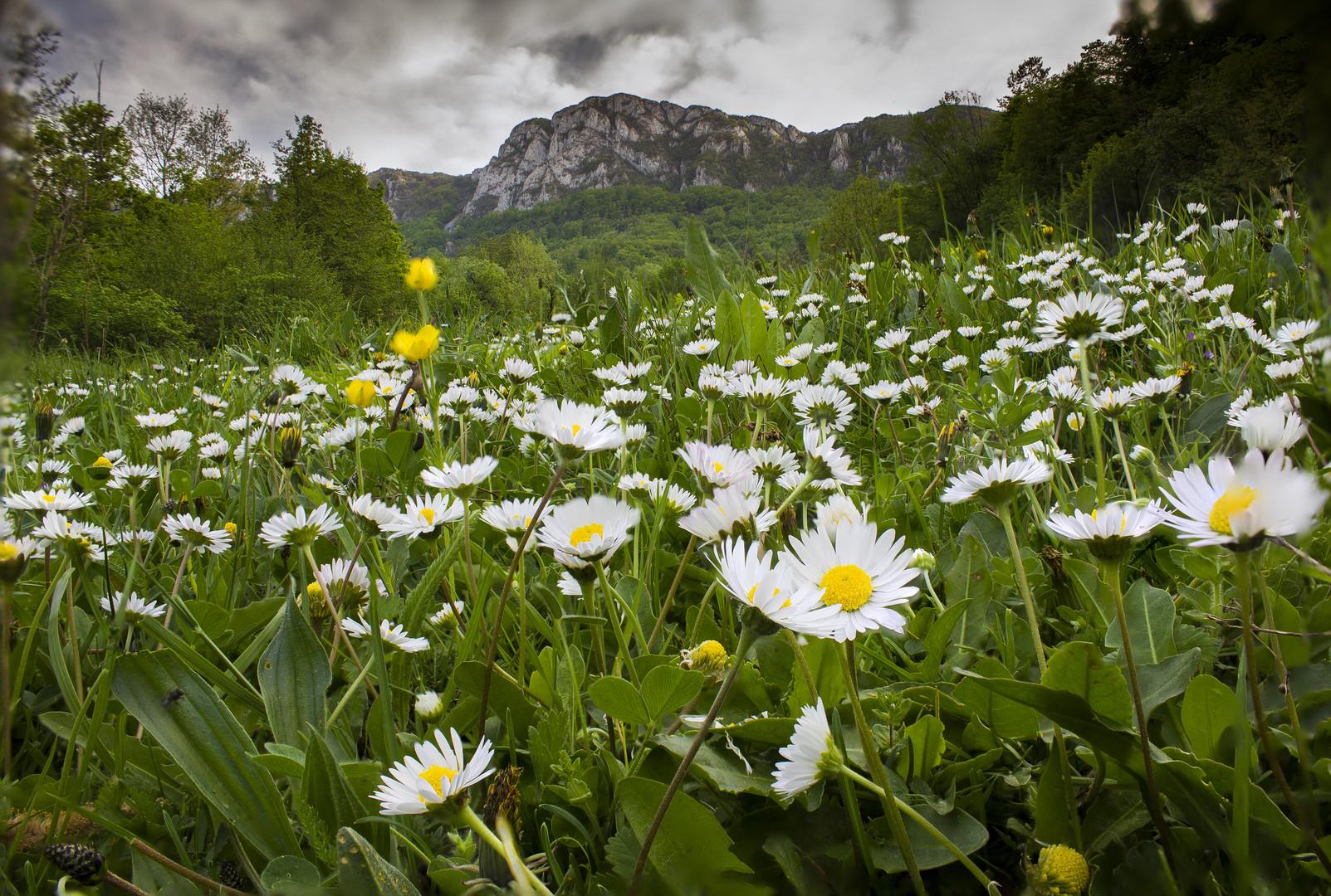 miris polja