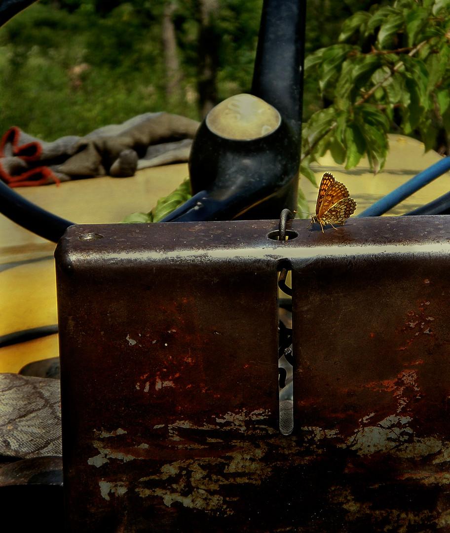 Leptir poljoprivrednik