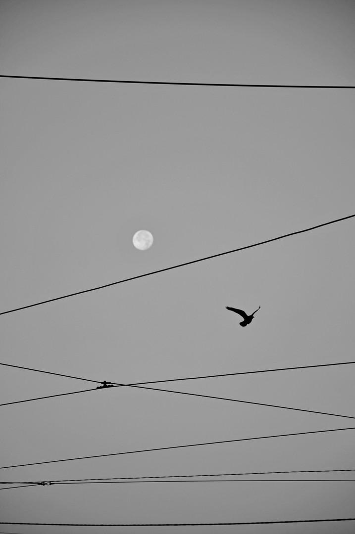 Mesec,ptica i žica