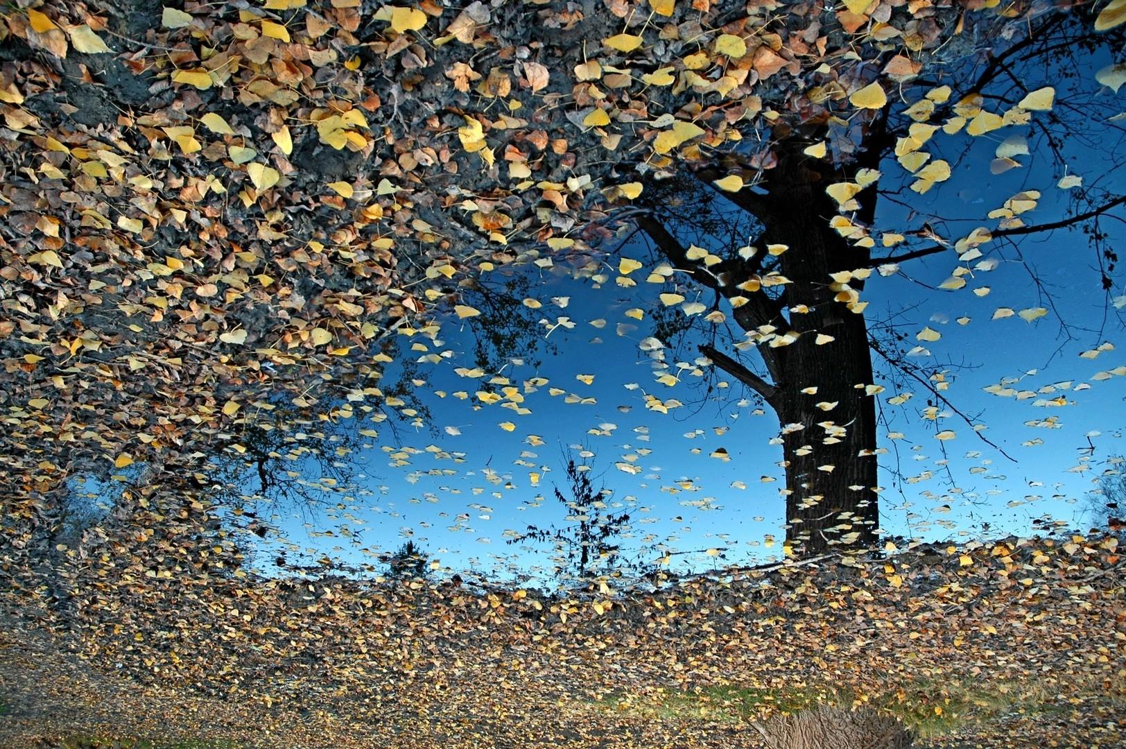 Jesen u Kovilju
