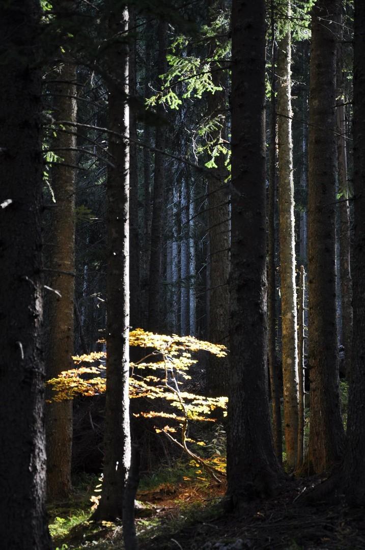 U šumi