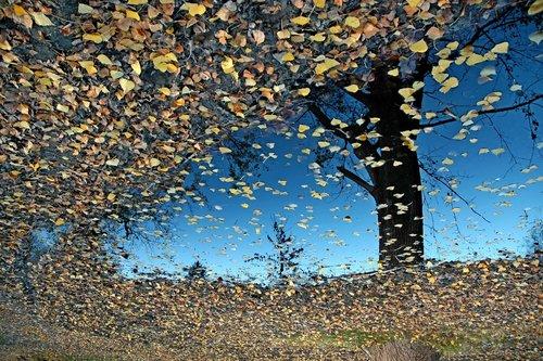 AleksaSrbin Jesen u Kovilju