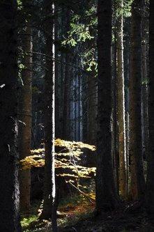 AleksaSrbin U šumi