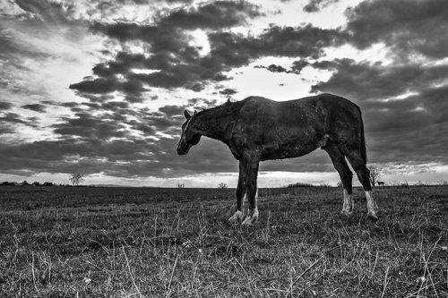 Aleksandar Konj