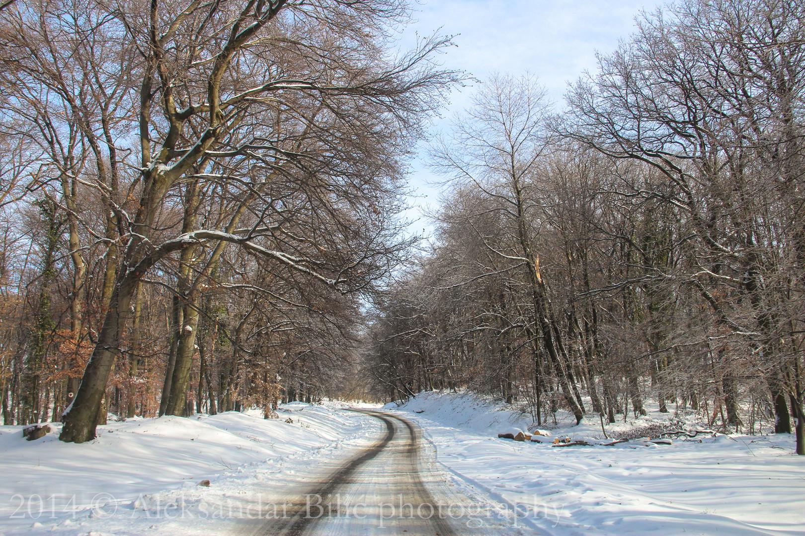 Snežni put