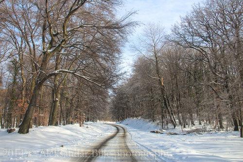 Aleksandar Snežni put