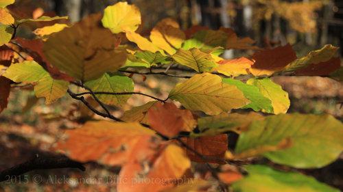Aleksandar Sve boje jeseni