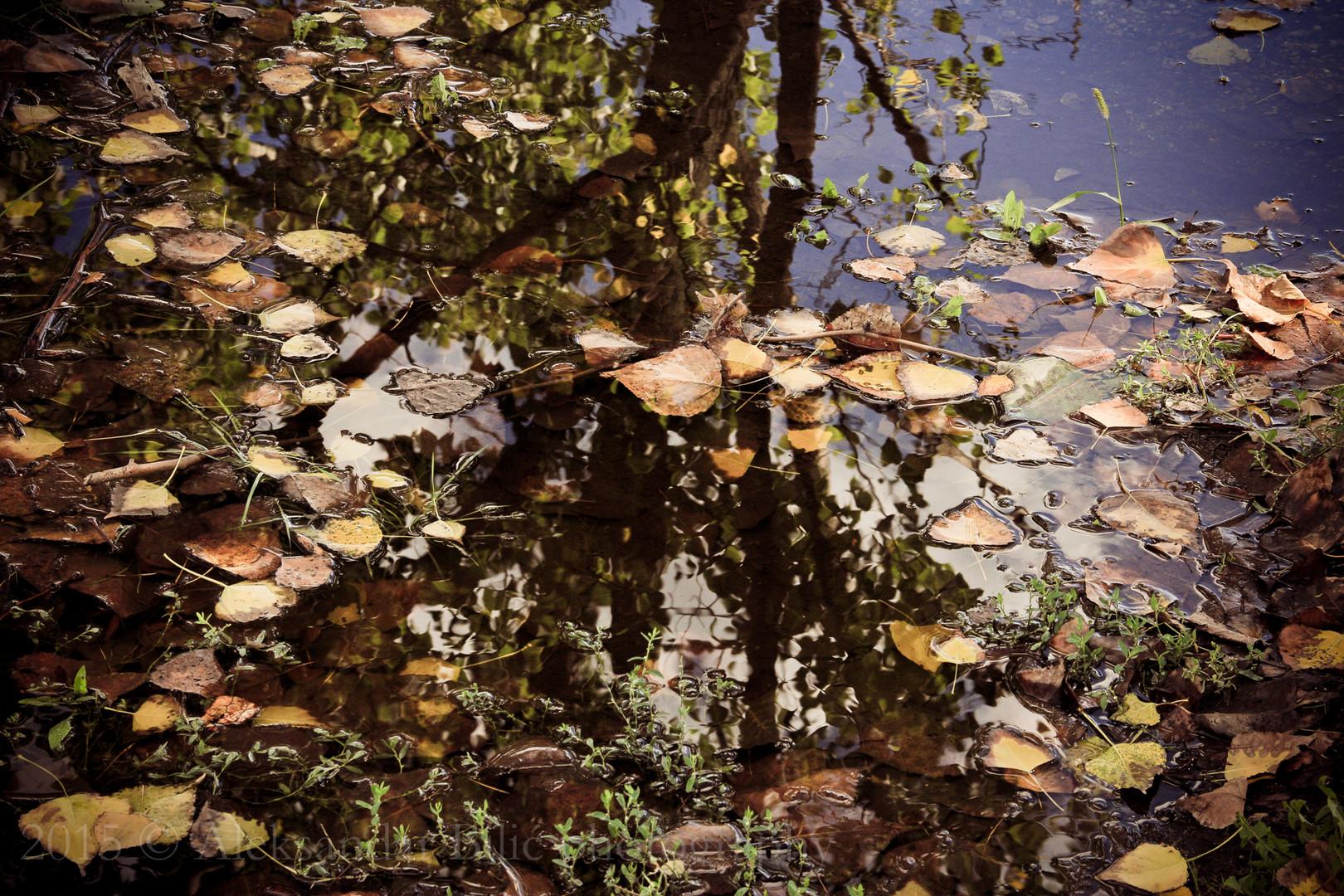 Jesenja refleksija