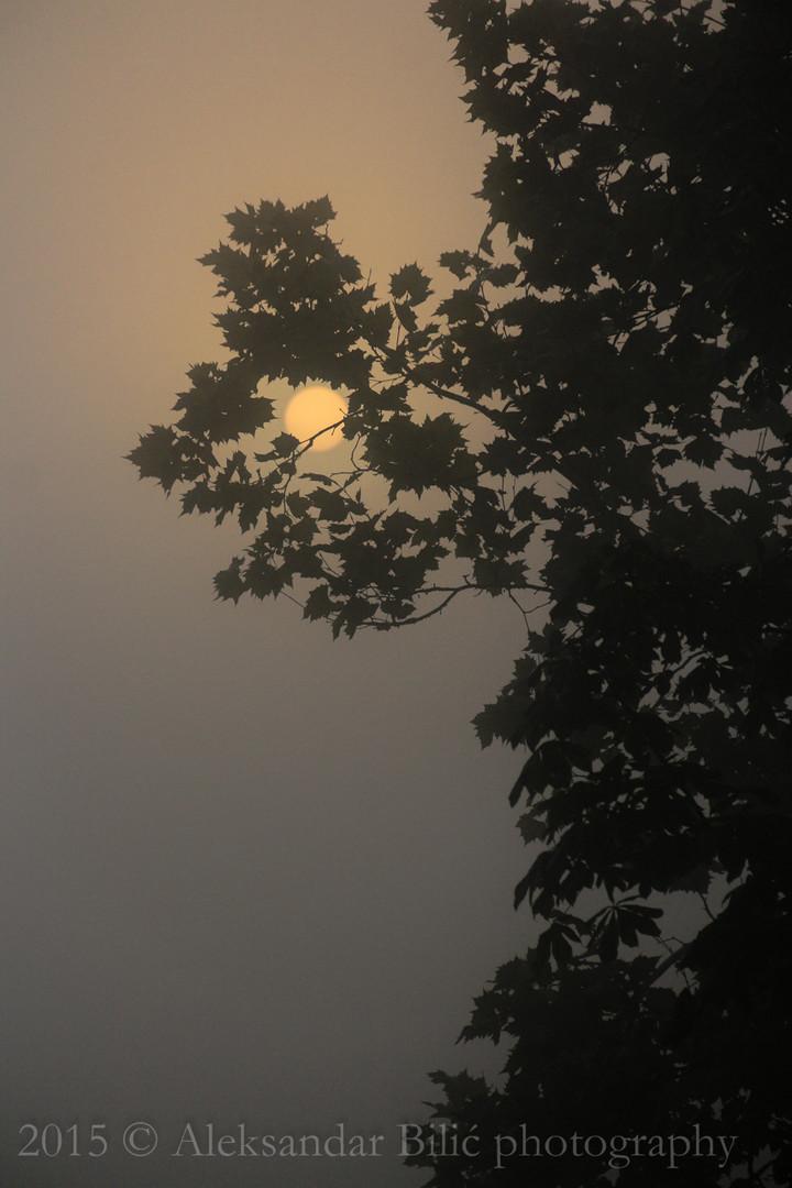 Sunce u magli