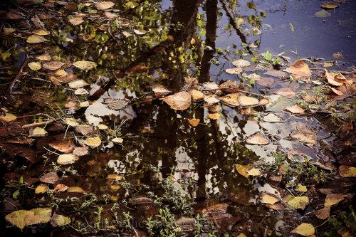 Aleksandar Jesenja refleksija
