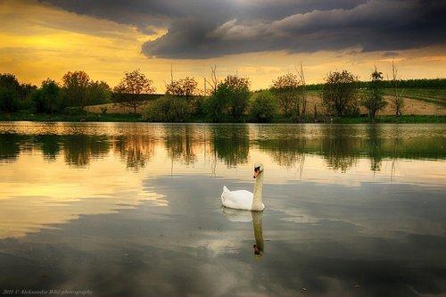 Aleksandar Suton na jezeru
