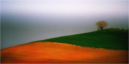 Bimbo Fields 04