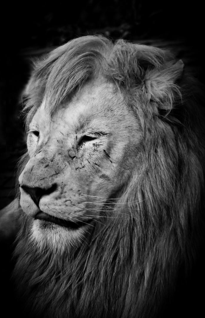 King..