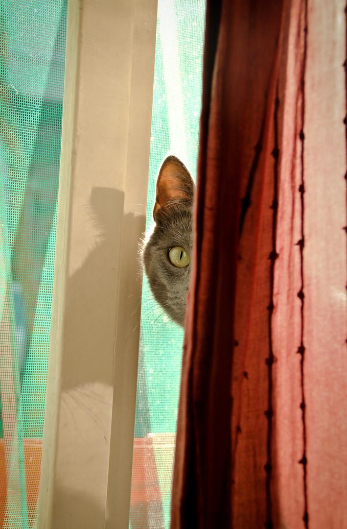 Neko te posmatra.....neko te stalno gleda...