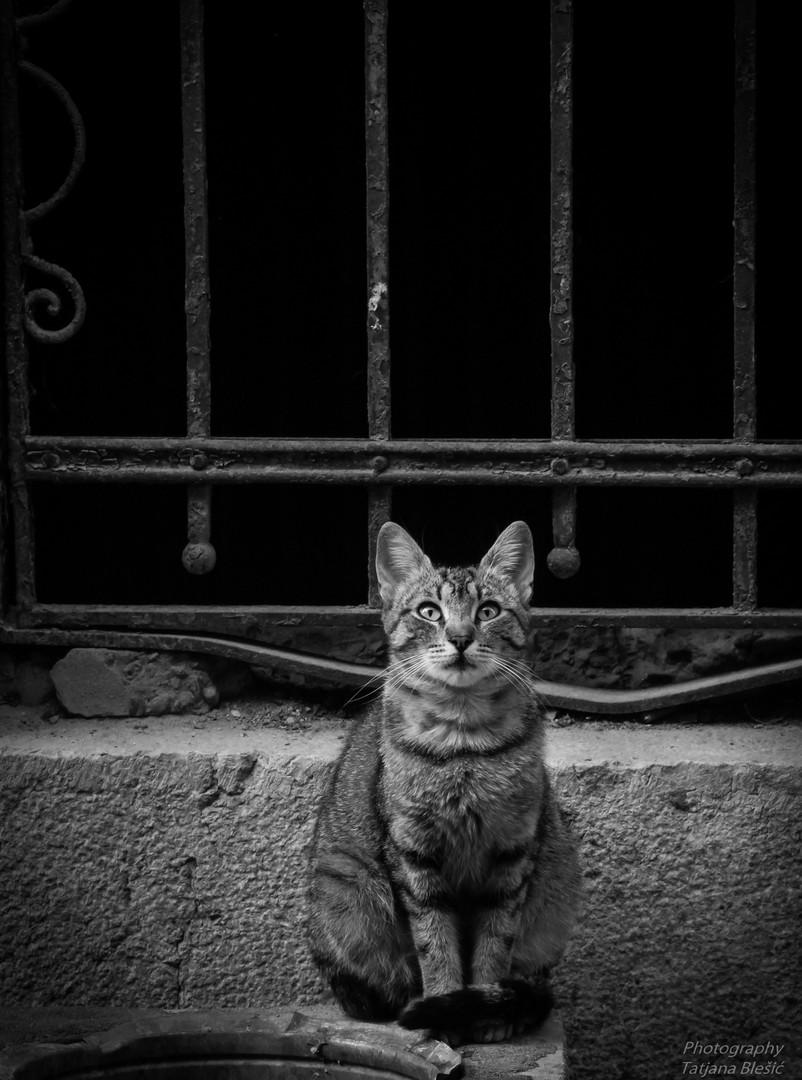 Samo te posmatram