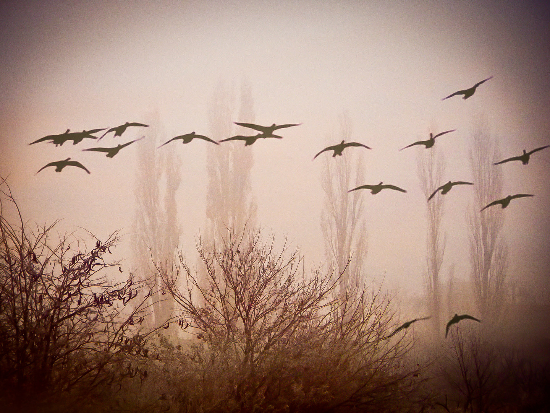 Ptice u magli