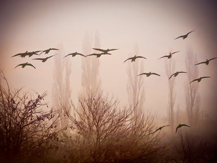 Blondie Ptice u magli