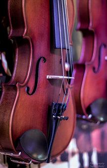 Blondie Violina
