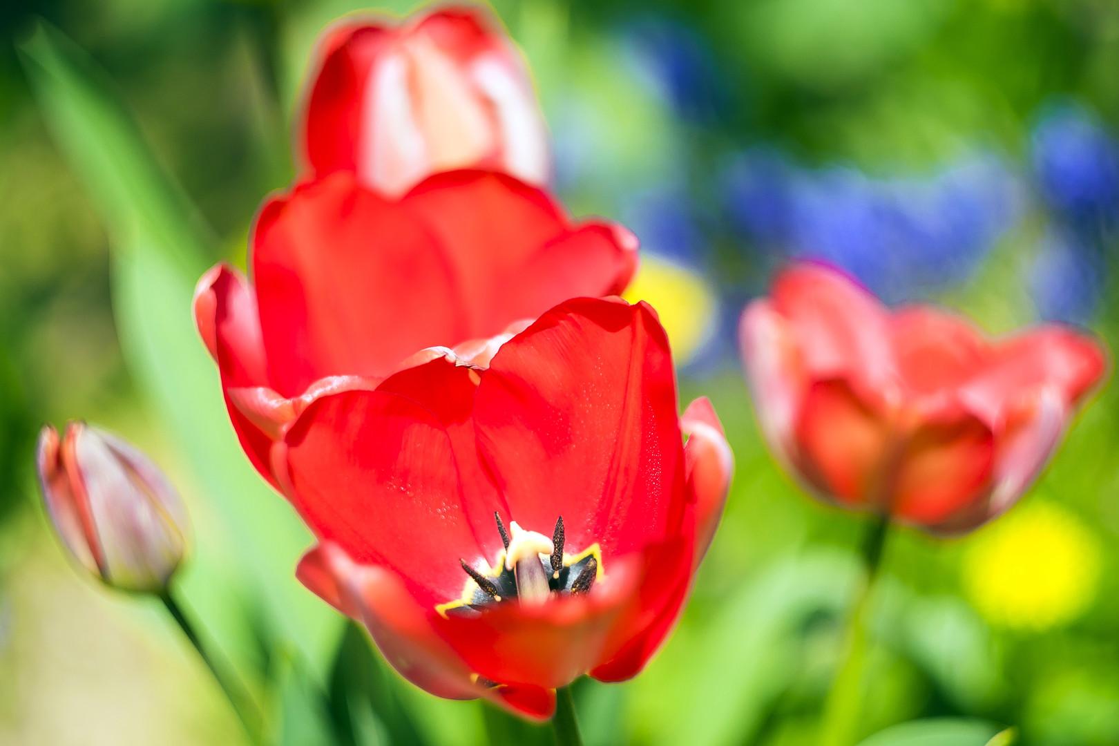 Boje proleća