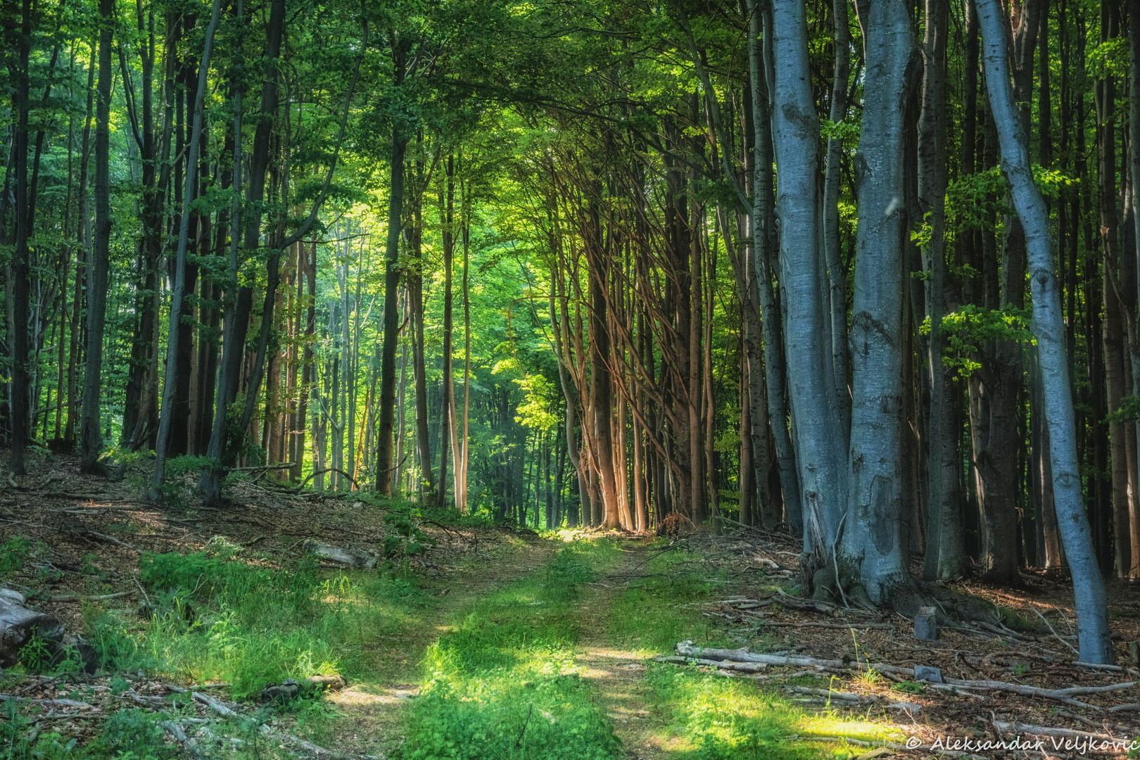 Prozračna šuma na Požerku, Kučaj
