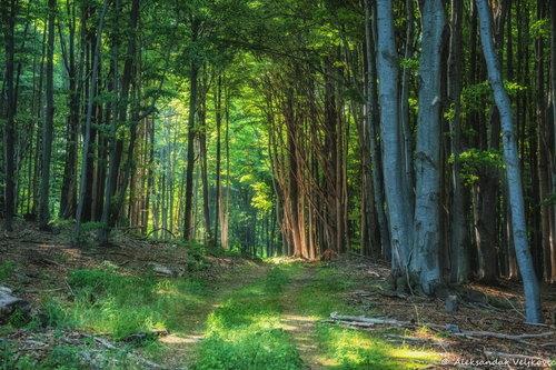 Bluealek Prozračna šuma na Požerku, Kučaj
