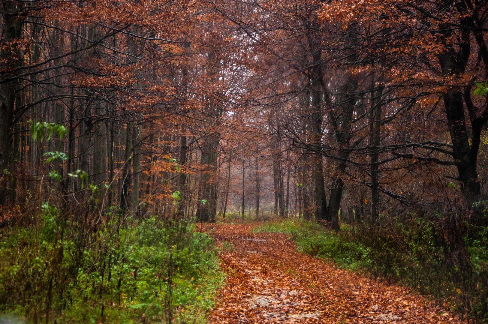 Šumski put na Kučajskim planinama