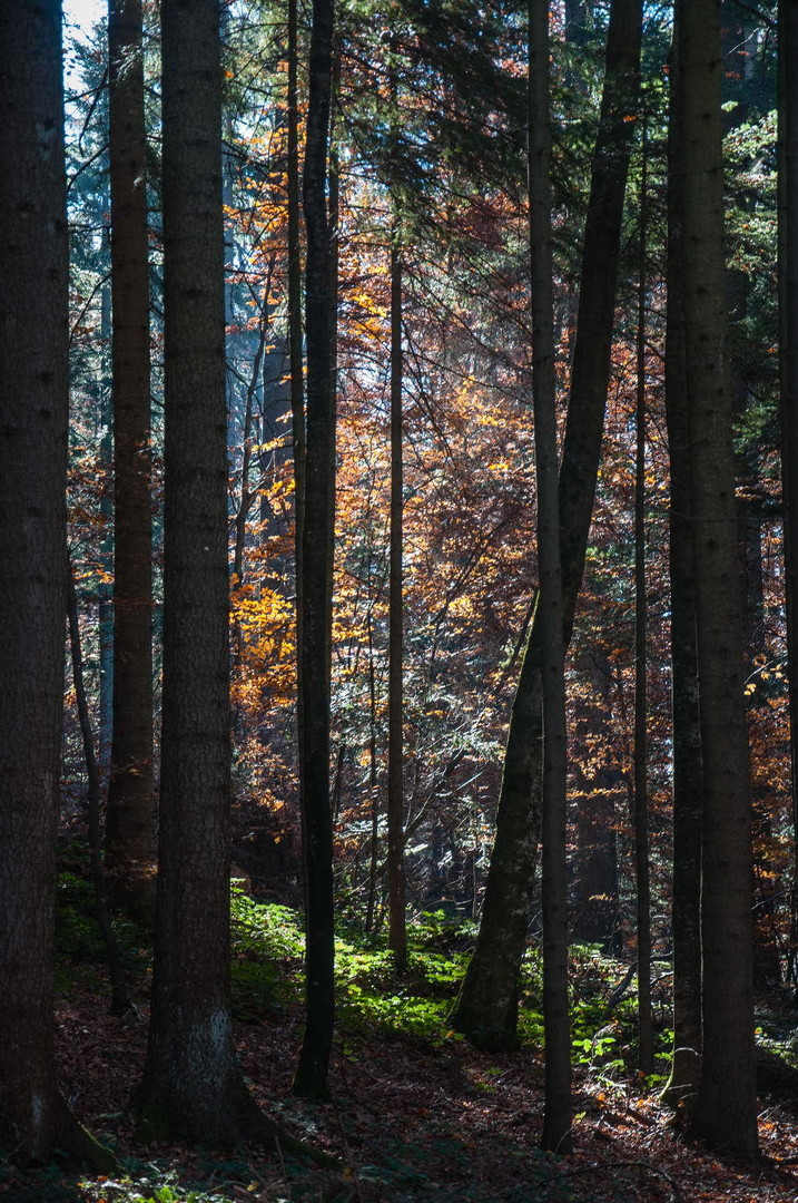 Jesen u Tarskim šumama