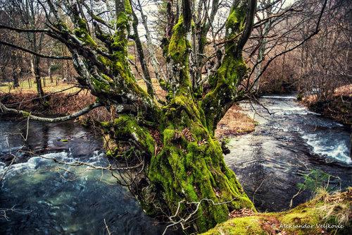 Bluealek Drvo protiv gravitacije