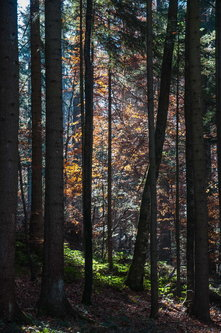 Bluealek Jesen u Tarskim šumama