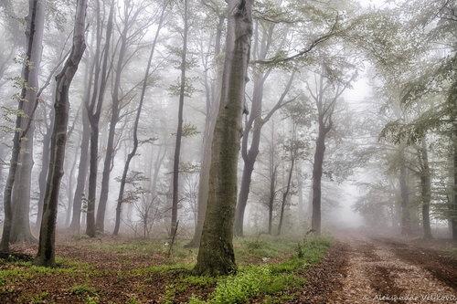 Bluealek Magla u šumi - Kučajske planine