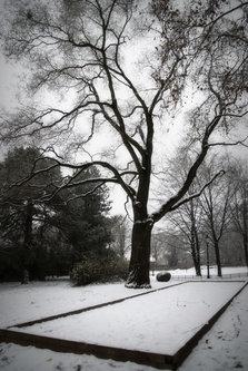 BokiS Sneg na kvadrat