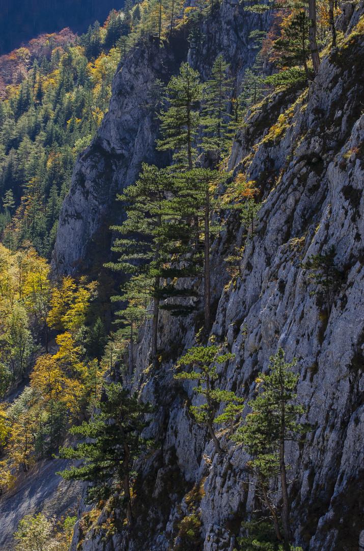 Planinske boje