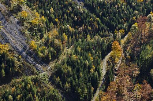 BokiS Jesen na planini