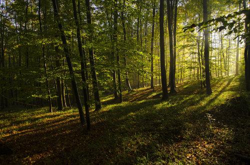 BokiS Jesenja svetlost