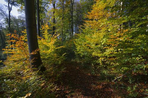 BokiS Stazom kroz Jesen
