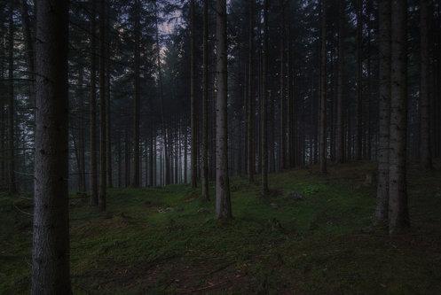 BokiS Sumska tisina