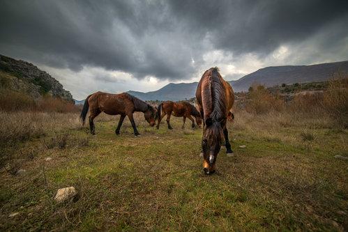 Branislav konji