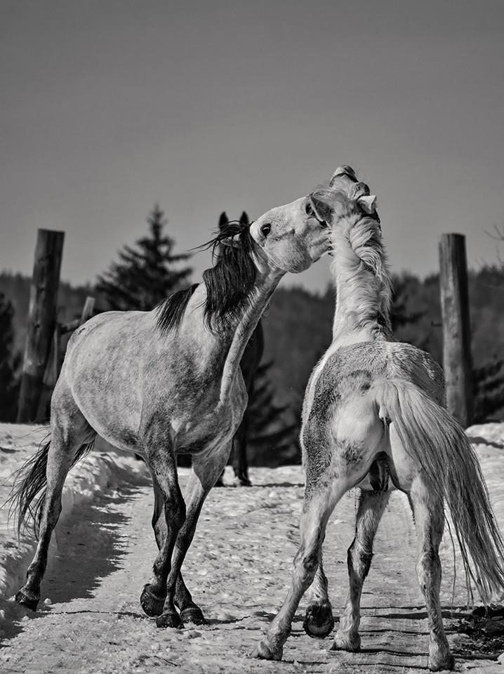 Igra konja