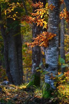 Brkica956 Jesenje boje.