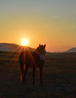 Brkica956 Na zalasku sunca.