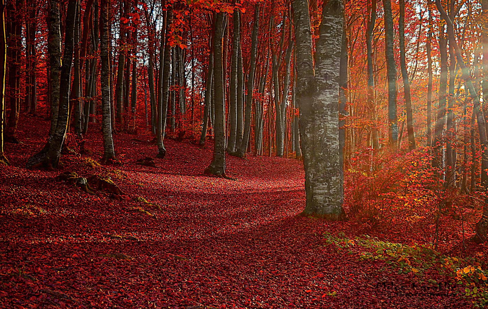 Jesenje boje.