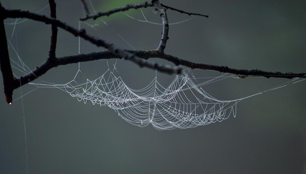 Rad jednog pauka