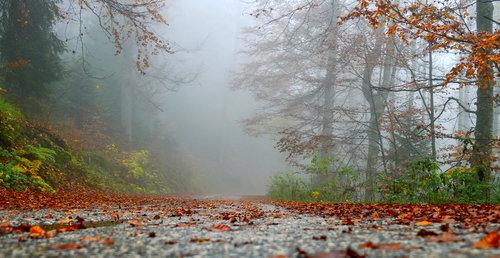 Brkica956 Jesen na Tari