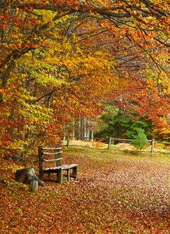 Brkica956 Jesenje boje
