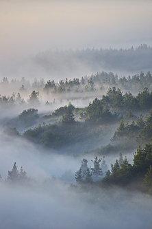 Brkica956 Jutarnja magla