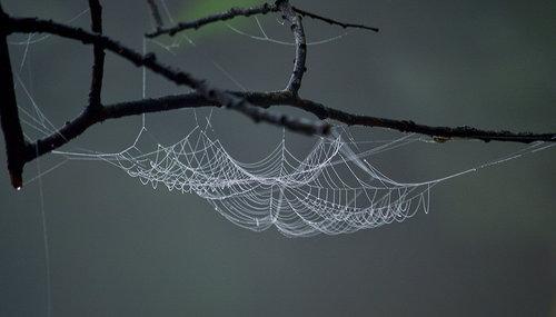 Brkica956 Rad jednog pauka
