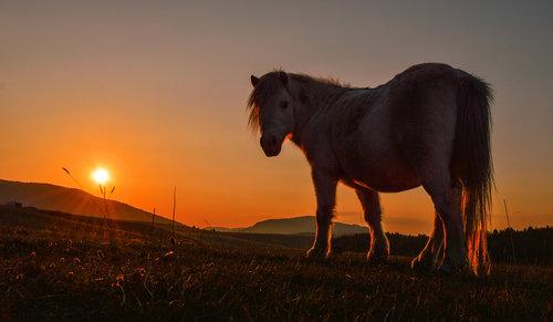 Brkica956 Zlatiborski zalazak sunca.