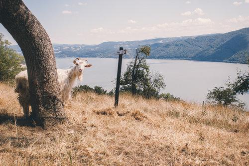 Danuberiverchild koza