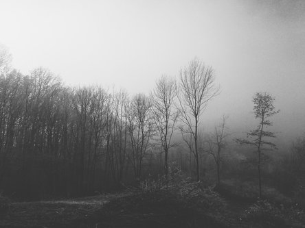Danuberiverchild зимско јутро