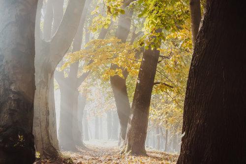 Danuberiverchild jesenje sunce